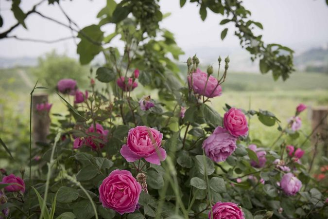 Carossi B&B – Fiori del giardino